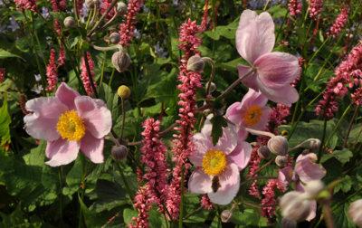 Blühende Pflanzungen