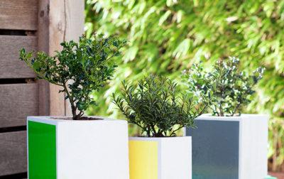 Stechpalme und Immergrün