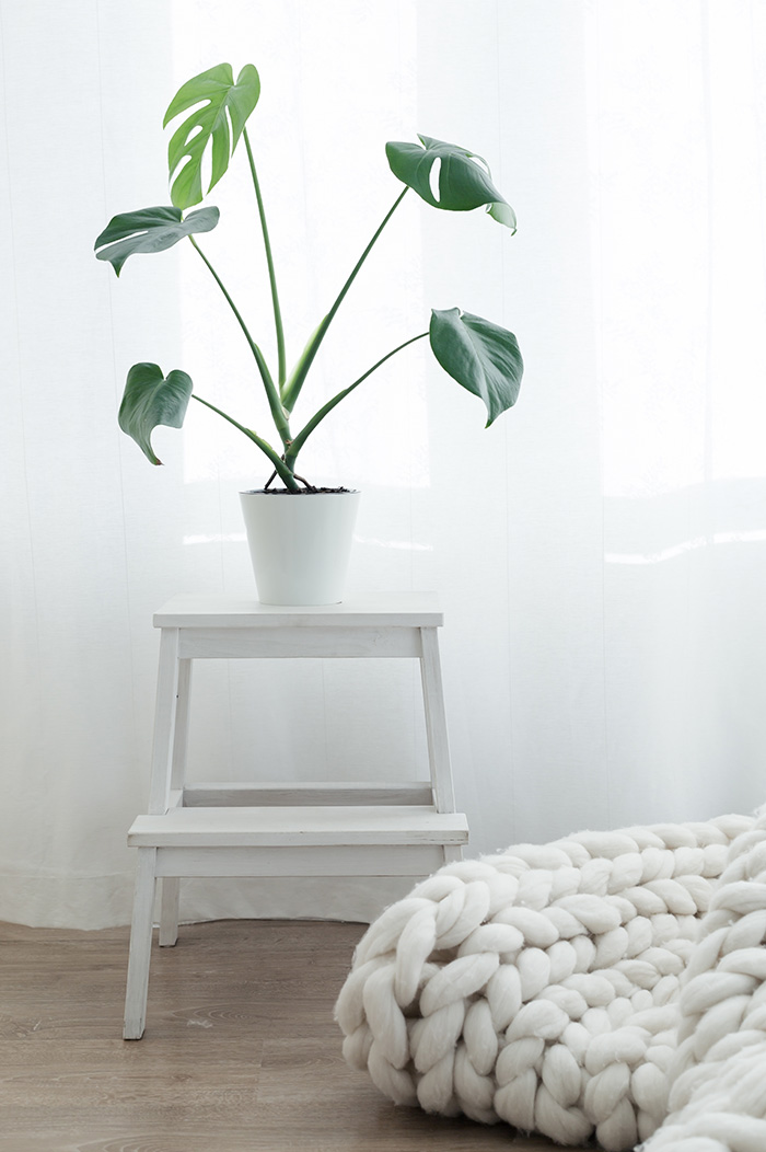 Pflanzen für das Schlafzimmer - Irßlinger GmbH & Co. KG