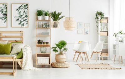 5 Gründe für Zimmerpflanzen