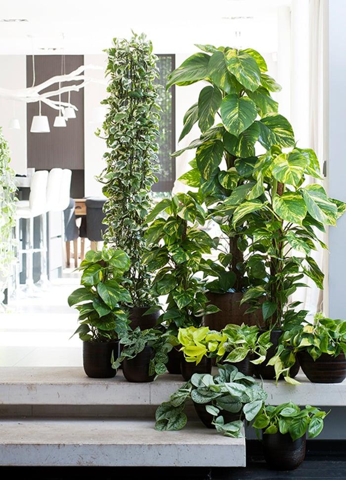 Pflanzen zur Raumklima verbesserung
