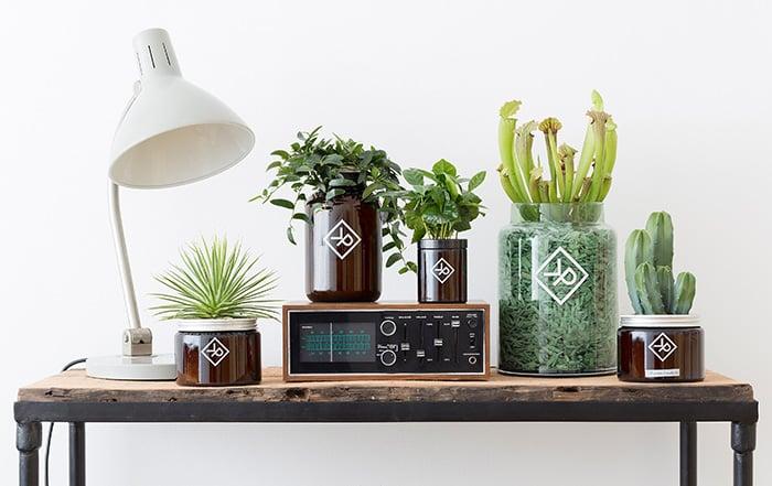 Maennerpflanzen