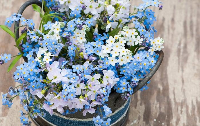 Blaue Blumen Valentinstag