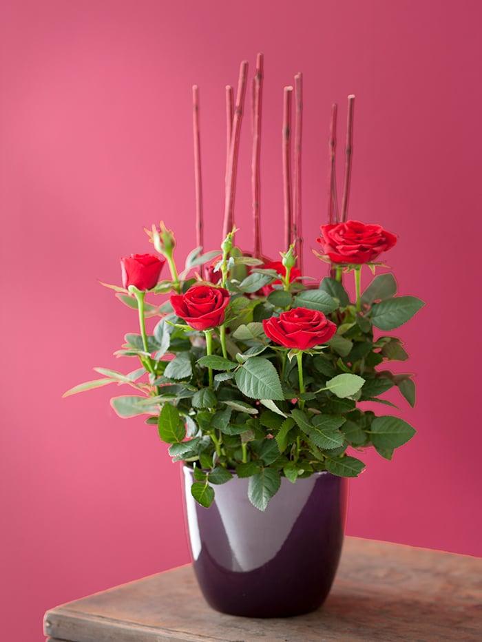 Rote Blumen Valentinstag