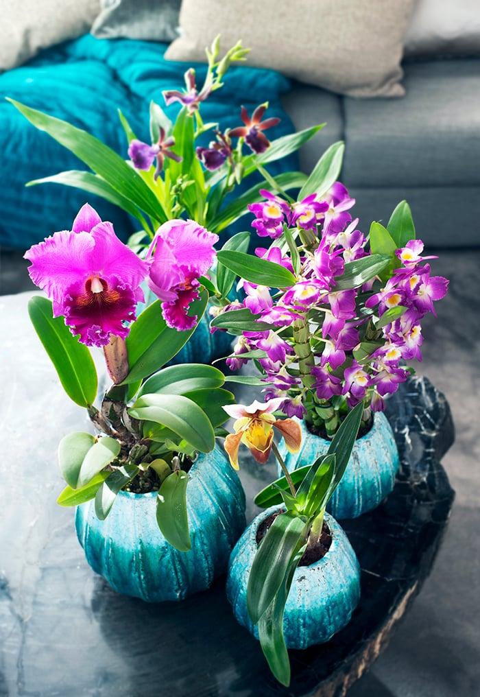 Violette Blumen Valentinstag