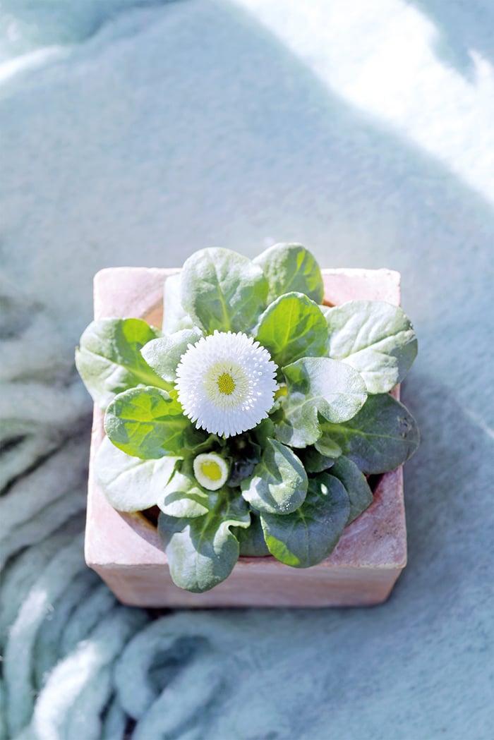 Weisse Blumen Valentinstag