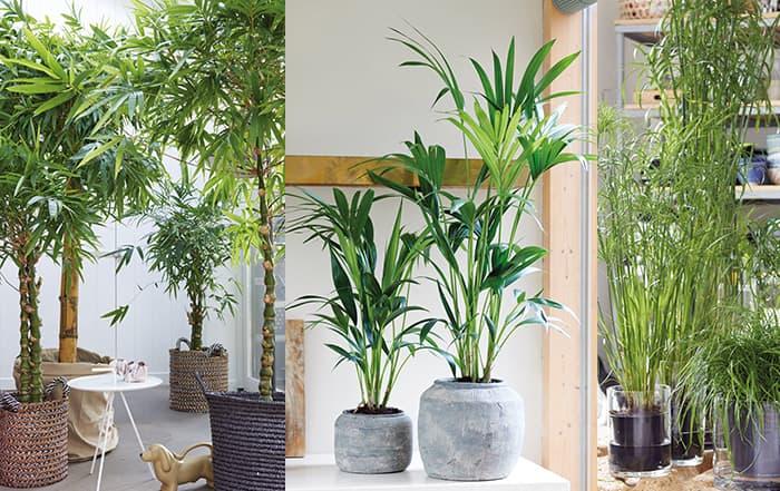 Haustierpflanzen