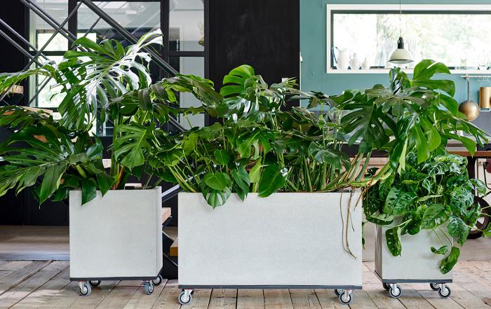 top5-gruenpflanzen_hauptbild_2